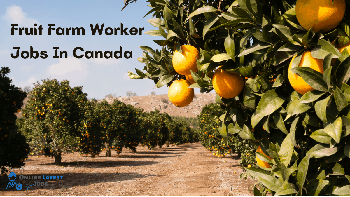 Fruit Farm Worker Jobs In Canada